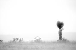 Foggy palm