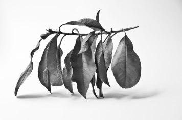 Texture---leaf