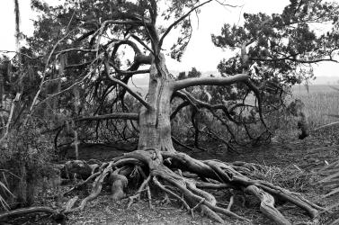 Tree in GA 2