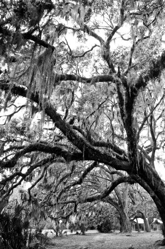 Tree in GA