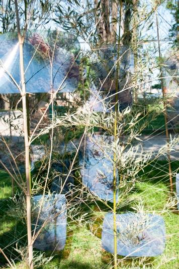 post-landscape-26